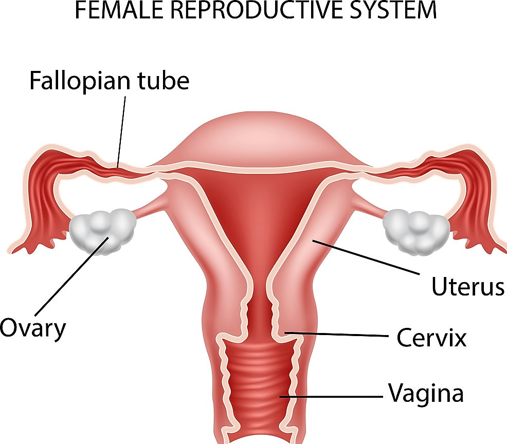 best fertility doctor in chennai